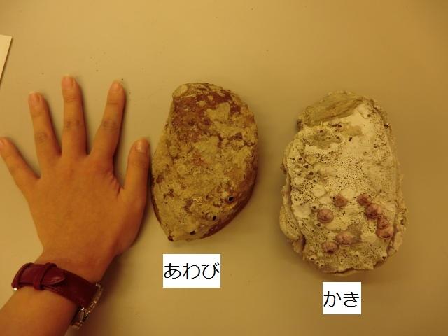 8/1開催 依光裕さんの鏡川漁教室①